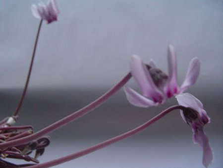 voorbeeld_bloemenexpositie